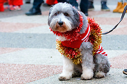 Over 1600 Santas and a few bedecked dogs take part in Scotland's fundraising Santa's run, walk and stroll around Edinburgh's West Prices Street Gardens, raising money to grant the Wishes of Children for When You Wish Upon A Star. Sunday 11th December 2016. (c) Brian Anderson | Edinburgh Elite media
