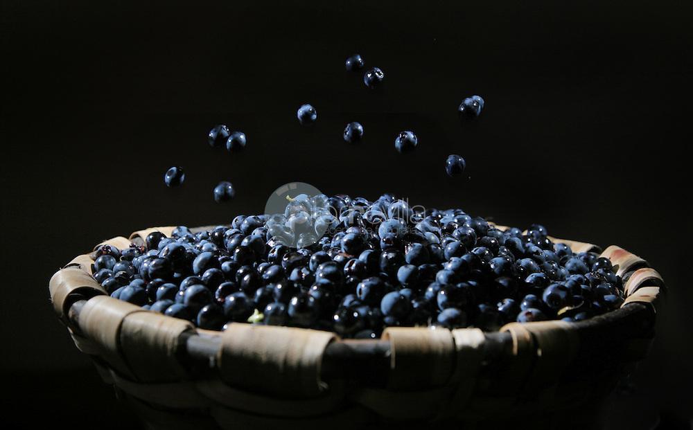 Granos de uva y cesto. La Rioja ©Daniel Acevedo / PILAR REVILLA