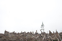 Clear cut logging in Oregon.