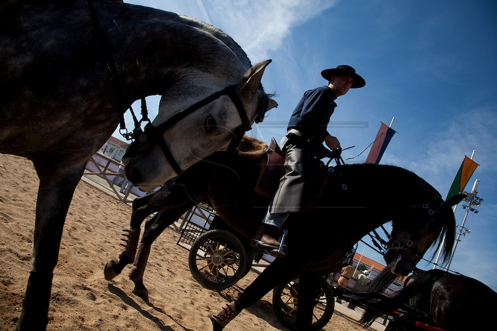 The Portuguese National Horse Fair in Golega exists since the 18th century and occurs every year in the little village in center Portugal. It´s aim is to celebrate the Portuguese Horse, the genuine Lusitanian.<br /> For one week all the country horse lovers gather in Golega to race, to see and be seen with their proud Lusitanian horses.<br /> The genuine Lusitanian Horse is one of the most important and expensive horse breeds in the world.  NO SALES IN PORTUGAL