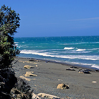 South America, Argentina, Valdes Peninsula. Sea Lion colony of the Peninsula.