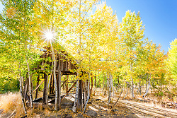 """""""Shack in the Aspens 10"""" - Photograph of an old shack in among aspens with yellow fall colors."""