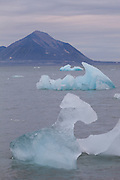 Icebergs calved off by Hansbreen float in Hornsund, Svalbard.