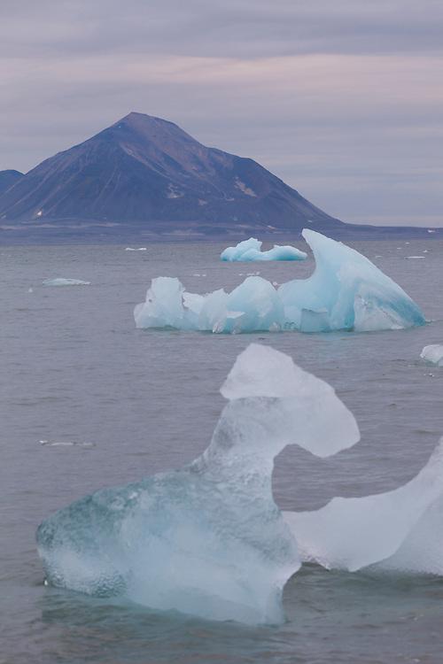 Icebergs calved off by Hansbreen float in Hornsund, Svalbard.