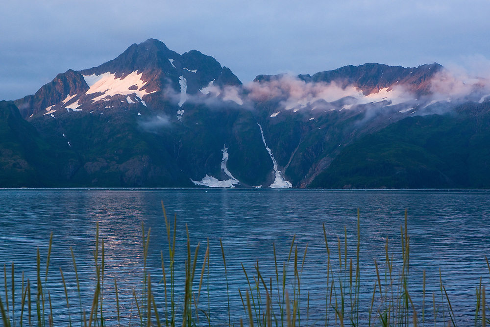 Tall grasses in the foreground with Aialik Bay and the Kenai Mountains in the background.