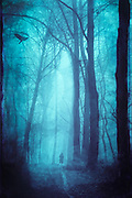Person with dog on a forest path in the fog - monochrome tinted photograph