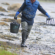 5/18/09 -- HARPSWELL, Maine. Ken Bailey of Brunswick has dug clams for a living for the last 16 years. With the passage of LD 447 he thinks he stands a chance to make ends meet. But - he's not ready to buy a new sink yet. Photo by Roger S. Duncan.