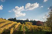 Chehalem's estate vineyard Coral Creek, Chehalem Wines, Willamette Valley, Oregon