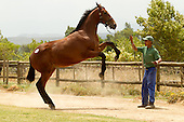 2012 Cape Yearling Sales