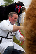 Prize winning bulls are prepared for the next class. The hairdryers are out and the shampoo is flowing at the Great Yorkshire Show, one of Britain's biggest agricultural shows. Its famous for its competitive displays of livestock. The event, established in 1837, attracts over 125 000 visitors a year and has over 10 000 entries to its pedigree competitions ranging from pigeons and rabbits to bulls and shire horses. At the heart of the show is the passion of the exhibitors who spend hundreds of hours ( and pounds)  training, preparing and grooming their animals.