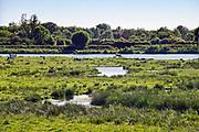 Nederland, Afferden, 3-6-2020 Sturen van het waterpeil in de Maas dmv de stuwen . Het peil in de rivier wordt 10 centimeter hoger gehouden als normaal. Hiermee probeert rijkswaterstaat de gevolgen van de droogte in het stroomgebied wat op te compenseren . Uiterwaarden bij Afferden waar de Eckeltsche Beek uitstroomt. Aan de overkant het maasheggen natuurgebied bij Sambeek . Foto: ANP/ Hollandse Hoogte/ Flip Franssen