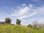 Israel, Golan Heights, Landscape