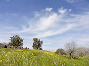 Israel, Golan Heights, Landscape
