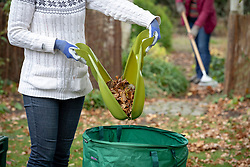 Autumn tidy up. Clearing leaves using a rake and leaf grabbers.