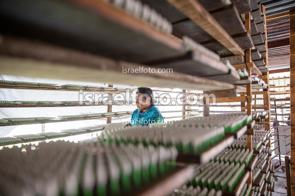 """Tultepec, Estado de México. 20 agosto 2021. David, pirotécnico, trabaja en la fabricación de juguetería pirotécnica, específicamente de los llamados """"cometas"""" o """"cebollitas"""".  /  David  while working in fireworks shop making """"comets"""" or """"little onions""""."""