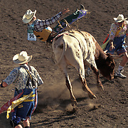 A pair of rodeo clowns make for an exciting experience in Santa Barbara, California