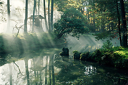 A drift of morning mist creates a mysterious atmosphere in the 900 year old garden of Saiho-ji, also known as Koka Dera (the Moss Temple) in Arashiyama, a district on the west side of Kyoto, Japan