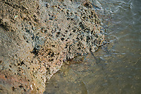 Wholes in the rock on the river shore of Tisza, where the grubs live for 3 years before becoming a Mayfly. Hungary
