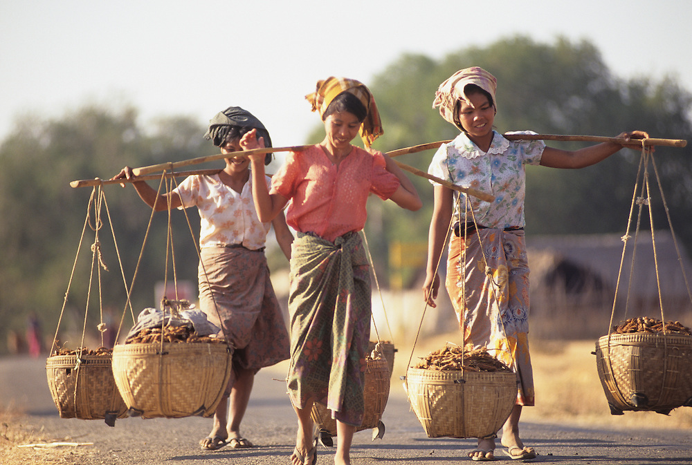 female farmers transporting harvest, Magwe Division, Central Myanmar,