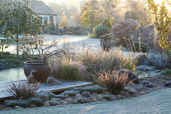 Early sunlight over the frozen pond and deck on a frosty winter's morning. Container of Prunus incisa 'Kojo-no-mai', wooden duck ornaments. Design: John Massey, Ashwood Nurseries