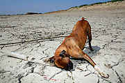 Meers, The Netherlands, Apr 27, 2007, Drought along the Meuse River. A dog playing on a dry shore. PHOTO © Christophe Vander Eecken..