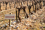 Grenache vines in a row and a sign at La Truffe de Ventoux truffle farm, Vaucluse, Rhone, Provence, France