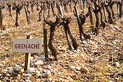 Grenache vines in a row and a sign at La Truffe de Ventoux truffle farm, Vaucluse, Rhone, Provence, France