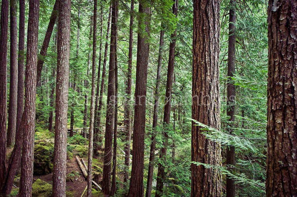 Olympic National Forest - Washington