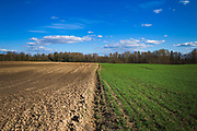 Recently plowed field and fresh green cereal field under blue sky on warm spring day with an edge of a forest behind it, near Mazgramzda, Kurzeme, Latvia Ⓒ Davis Ulands   davisulands.com