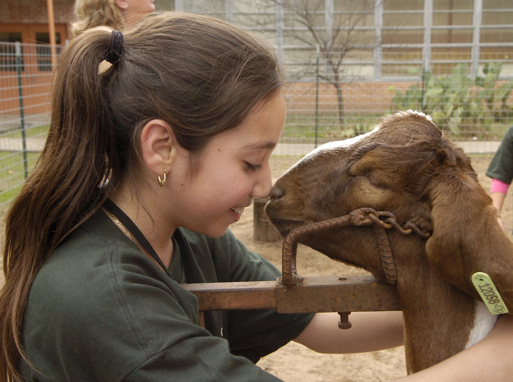 Austin, Texas: A fifth-grade Hispanic girl rubs noses with her goat while preparing for a 4-H animal showing in Travis County. Children from low-income families are getting their first experience with farm life through the program.  January 10, 2005 ©Bob Daemmrich  /