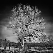 """I call this image """"Grandparents Tree"""". <br /> It sits on the ranch that my mother's family has had since the very early 20th century, in Arizona. <br /> The image has great significance to me because it happens to represent significance in both my personal mind and photographic experience. This was the first image that I completely visualized the final print before taking the photograph. <br /> The year was 1996.<br /> Nogales is a city in Santa Cruz County, Arizona, United States. The population was 20,837 at the 2010 census and estimated 20,407 in 2014. Nogales forms part of the larger Tucson-Nogales combined statistical area, with a total population of 1,027,683 as of the 2010 Census. The city is the county seat of Santa Cruz County.<br /> Nogales, Arizona, borders the city of Nogales, Sonora, Mexico, and is Arizona's largest international border community. The southern terminus of Interstate 19 is located in Nogales at the U.S.-Mexico border; the highway continues south into Mexico as Mexico Federal Highway 15. The highways meeting in Nogales comprise a major intersection in the CANAMEX Highway, connecting Canada, the United States, and Mexico. Nogales also is the beginning of the Sun Corridor, an economically important trade region stretching from Nogales to Prescott, AZ, including the Tucson and Phoenix metropolitan areas."""