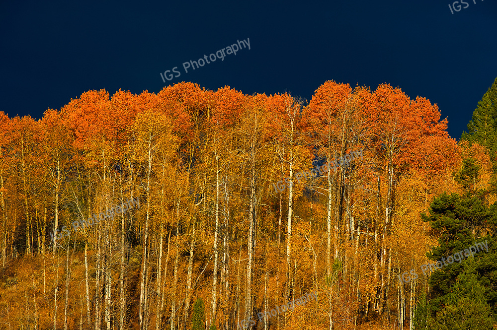 Fall foliage taken against the contrasting backdrop of a looming storm