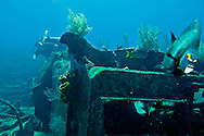 Debris and Marine Life, Oro Verde, Shipwreck, Grand Cayman