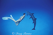 athlete Hector Islans ( Mexican national swimming team ) swims with wild Atlantic spotted dolphins, Stenella frontalis Little Bahama Bank, Bahamas