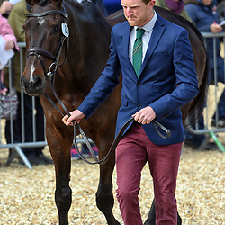 Nicolas Lucey Badminton horse trials May 2019. Nicolas Lucey equestrian eventing representing Great Britain riding Proud Courage in the Badminton horse trials 2019 Badminton Horse trials 2019 Winner Piggy French wins the title