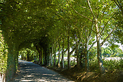 Mysterious tree covered lane by Rozel in St Martin region of Jersey, Channel Isles