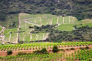 Vineyard. Mas Amiel, Maury, Roussillon, France