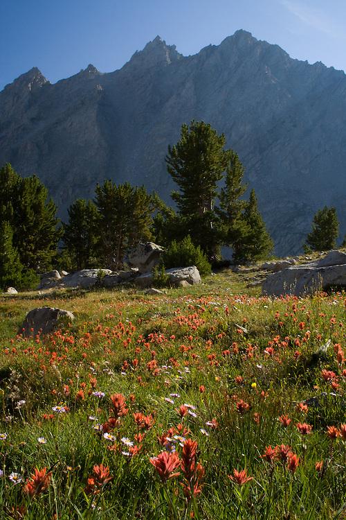 Surprise Valley, Pioneer Mountains, Idaho.