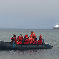 A zodiac raft carries geo-tourist from the National Geographic Endeavor to New Island in Britain's Falkland Islands.