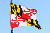 Maryland State flag.