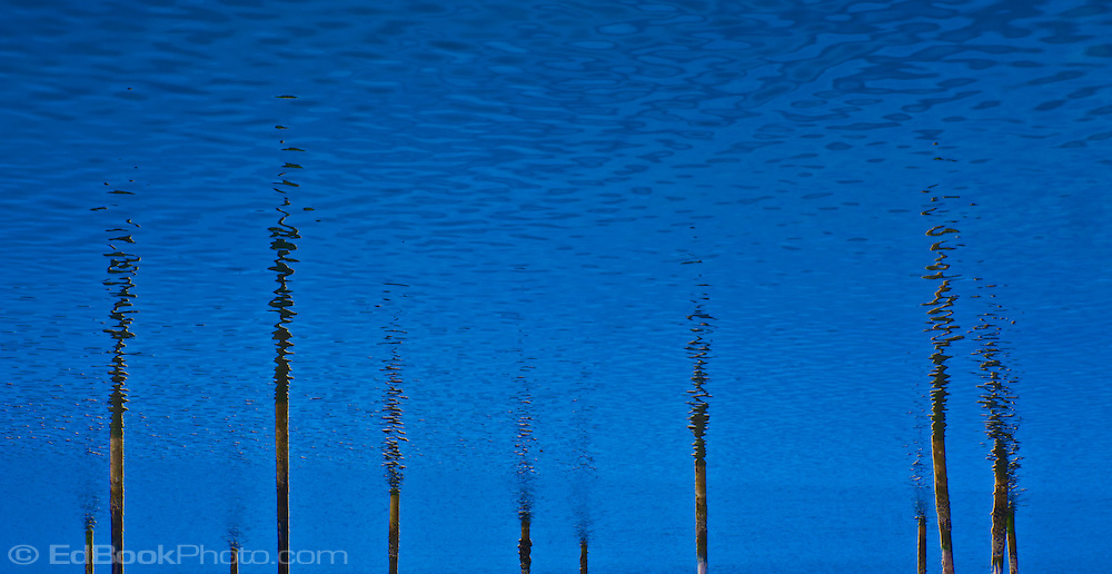pilings in water inverted abstract