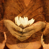 """A woman's hands holding a white lotus blossom. <br /> <br /> ~Dhyāna (Sanskrit; Devanagari: ध्यान) or Jhāna (झान) (Pāli) in Hinduism, Buddhism, Jainism [note 1] means meditation which is """"a deeper awareness of oneness which is inclusive of perception of body, mind, senses and surroundings, yet remaining unidentified with it"""".[2] Dhyana is taken up after preceding exercises,[1] and leads to samadhi and self-knowledge, separating māyā from reality to help attain the ultimate goal of mokṣa. (Wikipedia)"""