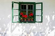 Red Gernaiums growing in flower pots on a rural Slovenian village window sill, on 18th June 2018, in Kupljenik, Slovenia