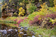 Autumn colors of the Dogwood the oaks and maples in the canyons of the mogollon rim.