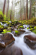 Small creek in the Sol Duc, Olympic National Park.