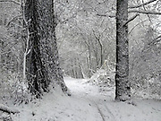 Nederland, Ubbergen,7-12-2012Bomen in de sneeuw. Besneeuwde bomen in het bos.Foto: Flip Franssen/Hollandse Hoogte