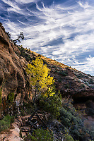 Hiking along the Canyon Overlook trail in Zion National Park provides unique opportunities for many different natural scenes in this desert Southwest oasis.