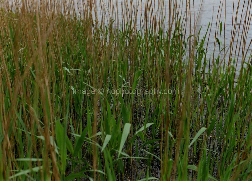 Lakeside reeds West Cork Ireland
