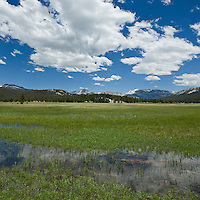 Yosemite national park, California - Tuolumne meadows in summer with flooded field