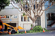 Onderhoud aan bomen in San Francisco. De Amerikaanse stad San Francisco aan de westkust is een van de grootste steden in Amerika en kenmerkt zich door de steile heuvels in de stad.<br /> <br /> Tree maintainance in San Francisco. The US city of San Francisco on the west coast is one of the largest cities in America and is characterized by the steep hills in the city.